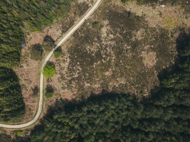 Foto aérea de uma estrada estreita em uma floresta em uma floresta de puddletown em dorset, reino unido
