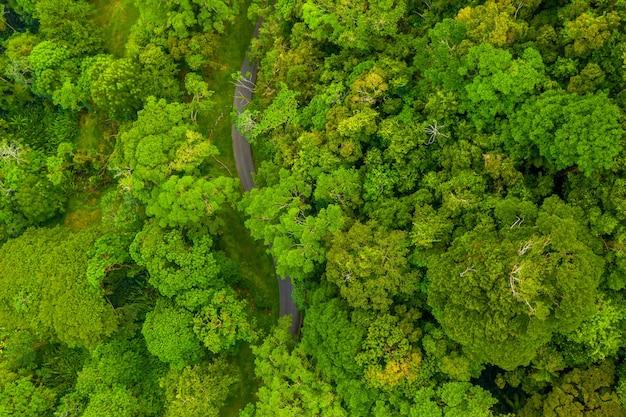 Foto aérea de uma floresta verde com uma estrada estreita