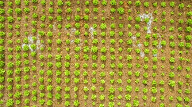 Foto aérea de vista superior de voar zangão de plantio de horta