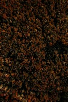 Foto aérea vertical de uma floresta de árvores em cores de outono