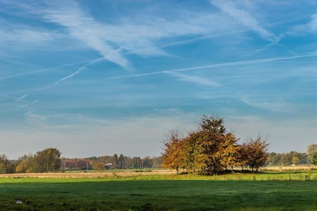 Foto ampla de um parque com árvores e um céu azul com listras de nuvens