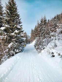 Foto ampla de uma estrada cercada por pinheiros com céu azul no inverno