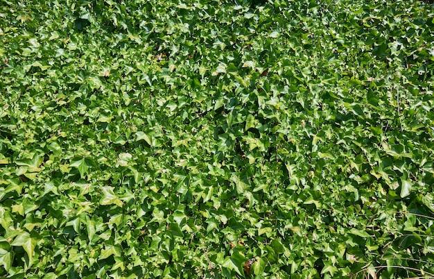 Foto aproximada de folhas de plantas