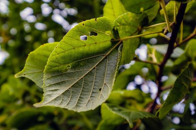 Foto aproximada de folhas em um galho com buracos