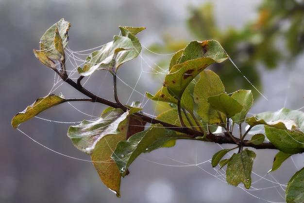 Foto aproximada de folhas no meio de uma névoa coberta por uma teia de aranha