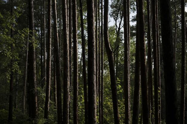 Foto aproximada de troncos de árvores