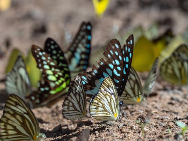 Foto aproximada de um bando de borboletas no chão