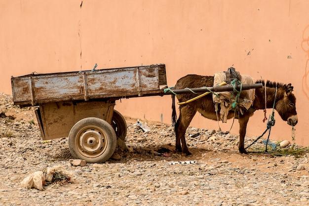Foto aproximada de um burro com uma carga nas costas, ao lado de uma parede de coral