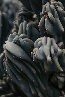 Foto aproximada de um cacto raro espetado em um deserto