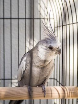 Foto aproximada de um corella em uma gaiola