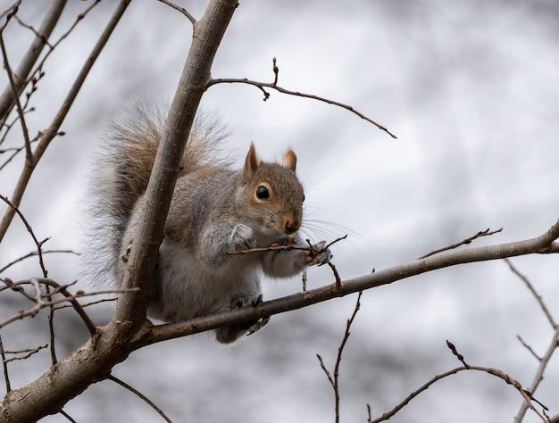 Foto aproximada de um esquilo fofo em uma árvore