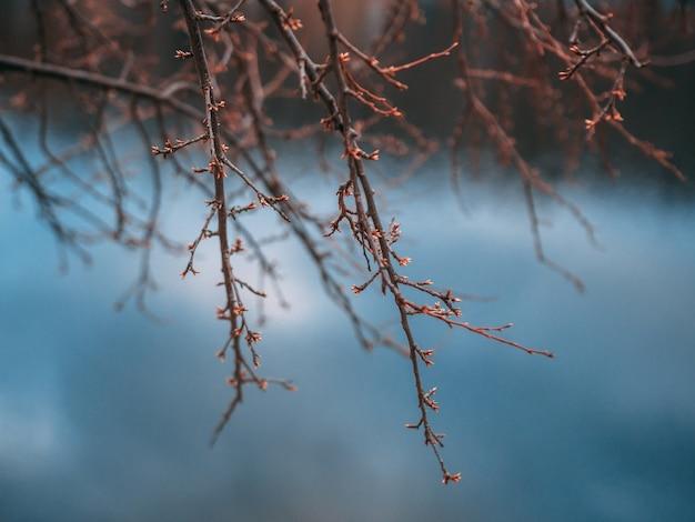 Foto aproximada de um galho de árvore