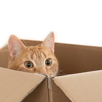 Foto aproximada de um gato ruivo doméstico sentado em uma caixa marrom com a cabeça na beirada