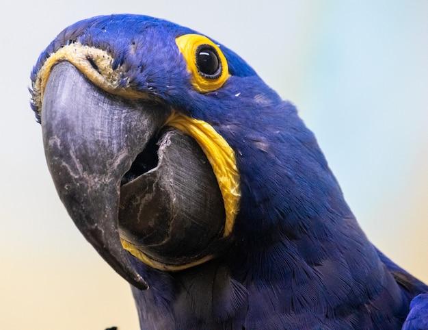 Foto aproximada de um papagaio azul e amarelo