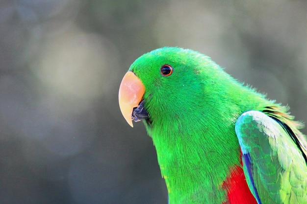 Foto aproximada de um papagaio colorido Foto Premium