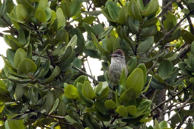 Foto aproximada de um pardal