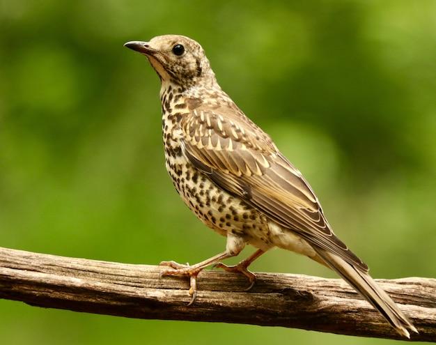 Foto aproximada de um passarinho fofo