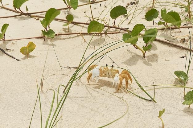 Foto aproximada de um pequeno caranguejo e folhas verdes no solo arenoso