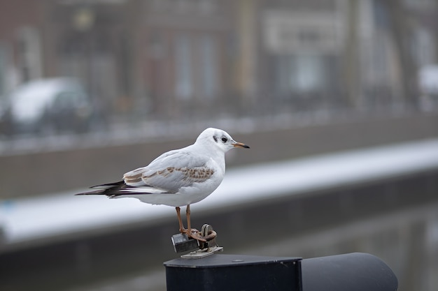 Foto aproximada de um pequeno pássaro branco em pé sobre um pedaço de metal durante o dia