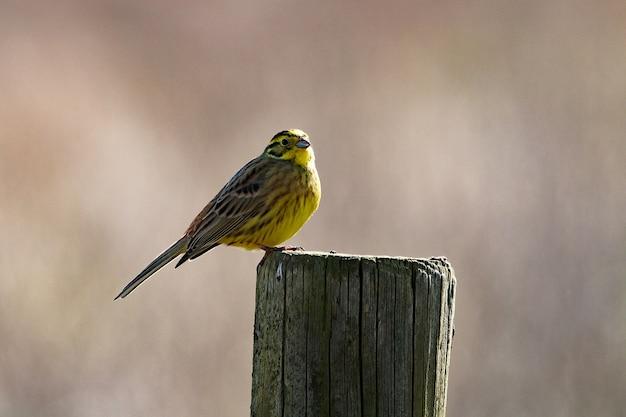 Foto aproximada de um pequeno pássaro empoleirado em uma madeira seca