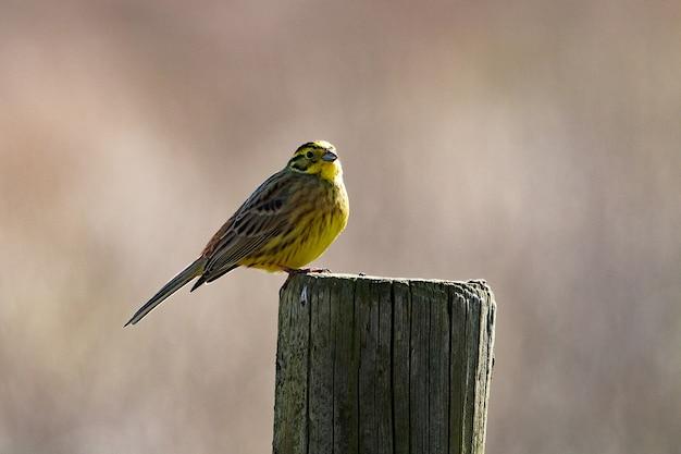 Foto aproximada de um pequeno pássaro pousando em madeira seca