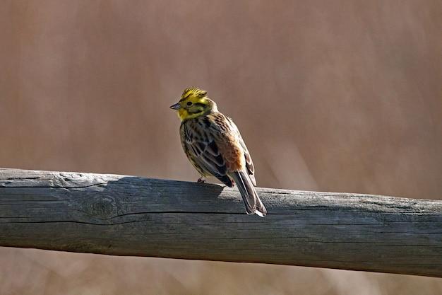 Foto aproximada de um pequeno pássaro sentado em um pedaço de madeira seca