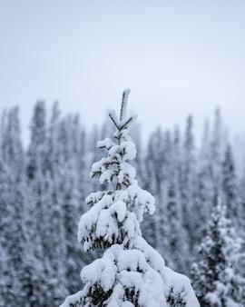 Foto aproximada de um pinheiro coberto de neve em uma estação de esqui