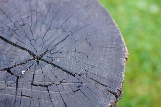 Foto aproximada de um toco de árvore