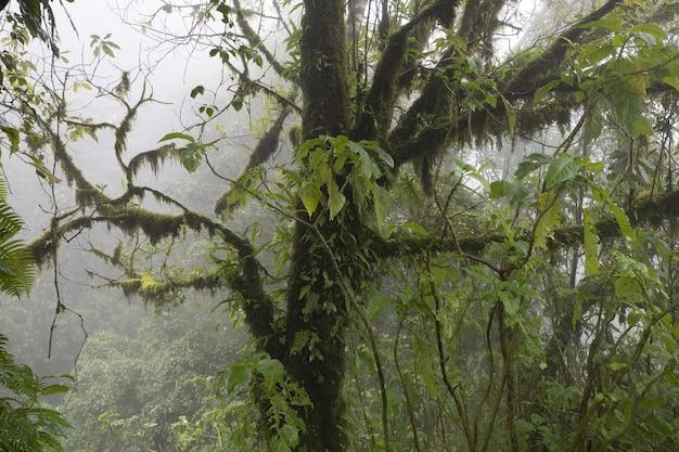 Foto aproximada de uma árvore em uma floresta coberta pela névoa