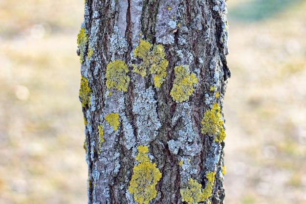 Foto aproximada de uma árvore na floresta