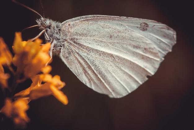 Foto aproximada de uma borboleta em uma flor amarela