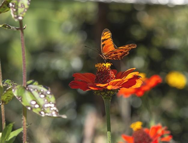 Foto aproximada de uma borboleta em uma flor