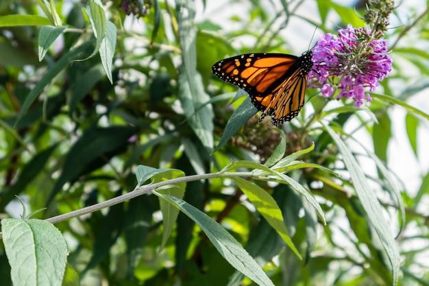 Foto aproximada de uma borboleta na flor