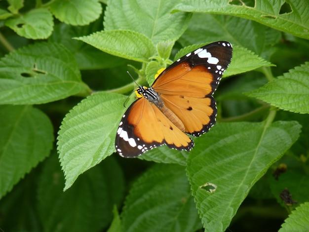 Foto aproximada de uma borboleta na vegetação