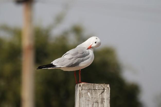 Foto aproximada de uma gaivota empoleirada em um pedaço de madeira
