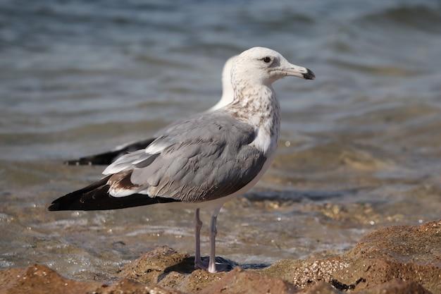 Foto aproximada de uma gaivota empoleirada em uma praia arenosa