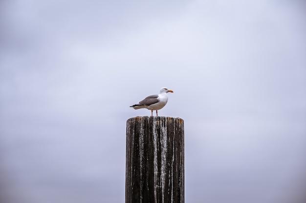 Foto aproximada de uma gaivota na madeira