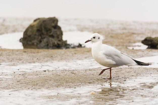 Foto aproximada de uma gaivota na praia