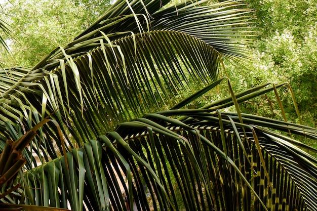 Foto aproximada de uma palmeira à luz do dia