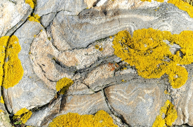 Foto aproximada de uma superfície rochosa coberta de musgo