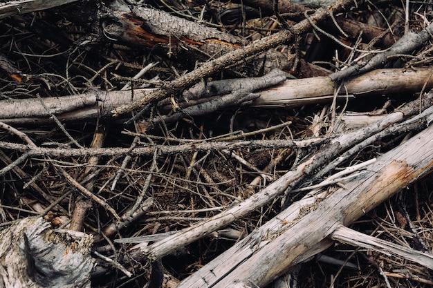 Foto aproximada dos galhos da árvore quebrados