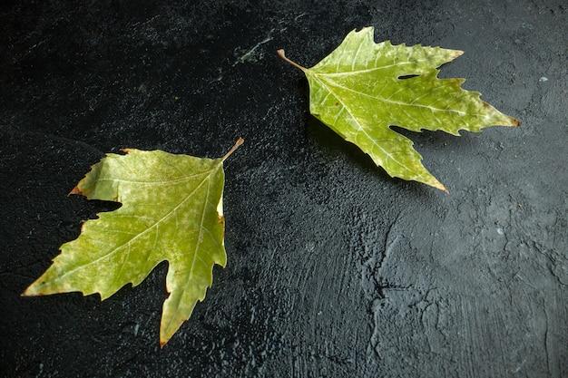 Foto colorida de outono com vista frontal da folha verde na árvore de fundo escuro