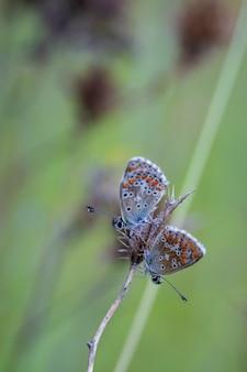 Foto com foco raso de duas borboletas em seu ambiente natural