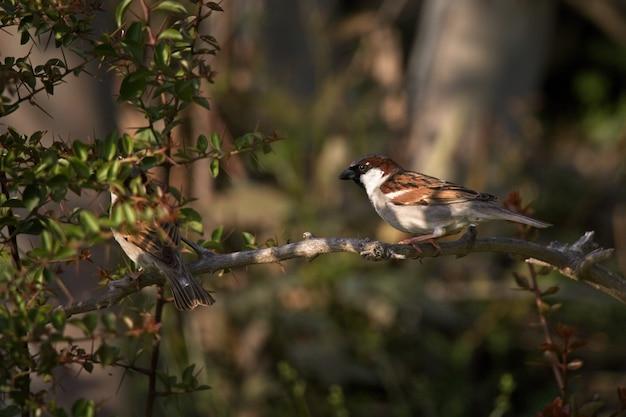 Foto com foco seletivo de dois pássaros no galho de uma árvore na floresta
