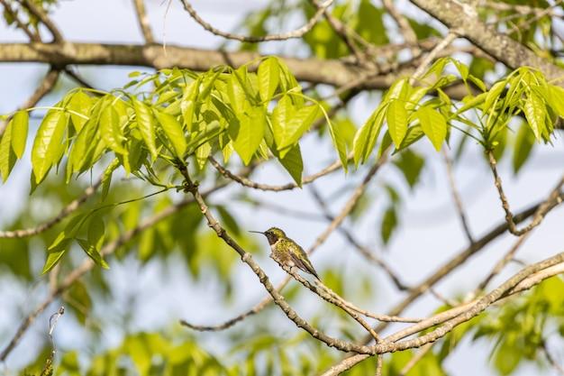 Foto com foco seletivo de um colibri empoleirado em um galho de árvore