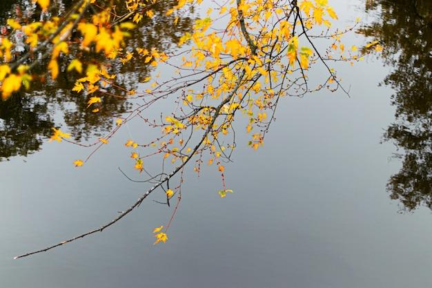 Foto com foco seletivo de um galho de árvore com folhas amarelas
