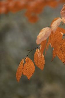 Foto com foco seletivo de um galho de árvore com folhas de laranja no outono