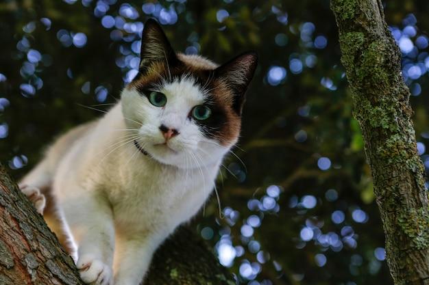 Foto com foco seletivo de um gato adorável olhando para a câmera em um galho de árvore
