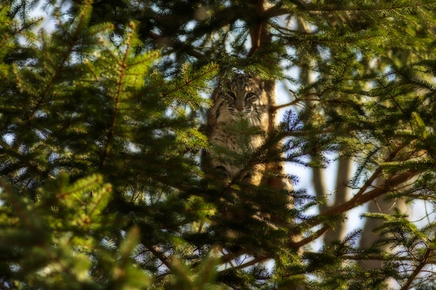 Foto com foco seletivo de um gato selvagem em um galho de árvore