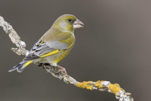 Foto com foco seletivo de um lindo pássaro no galho de uma árvore com um fundo desfocado